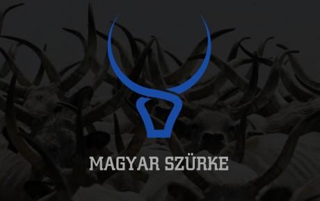 logo-design-radex-media-magyar-szurke